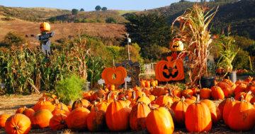 Windward's Favorite Fall Activities